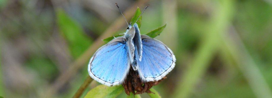 Papillons sur le site des Quiès